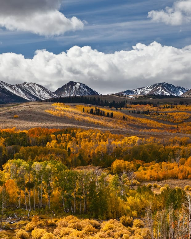how-to-distinguish-a-quaking-aspen-from-a-white-birch