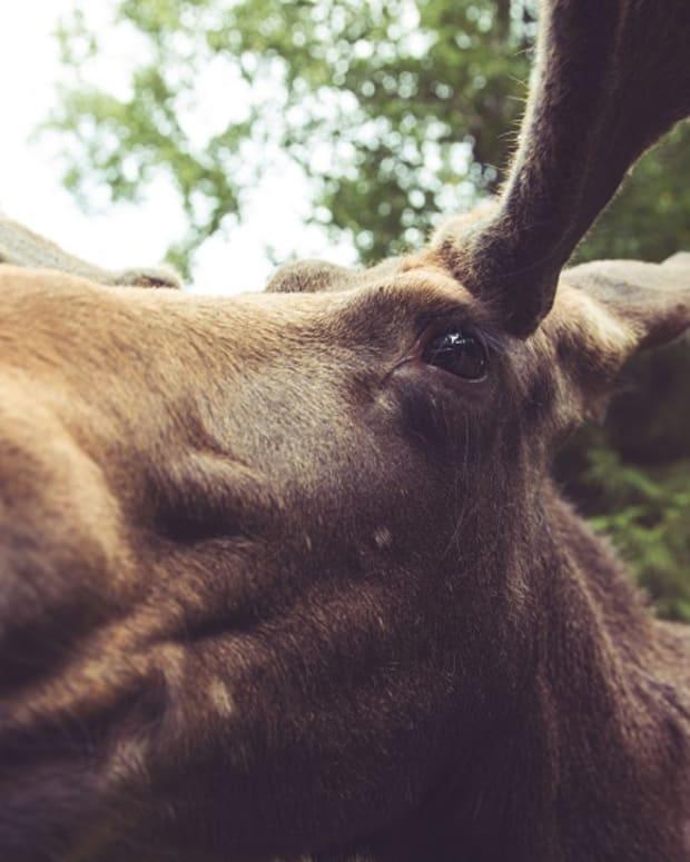 gardsjo-moose-park-uppsala-sweden