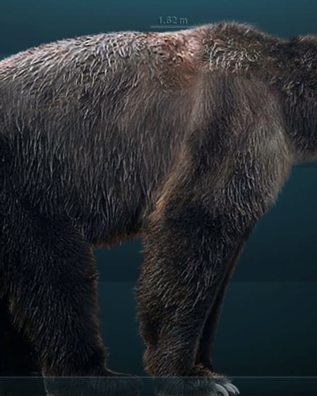 giant-short-faced-bear-sightings-is-arctodus-simus-still-alive