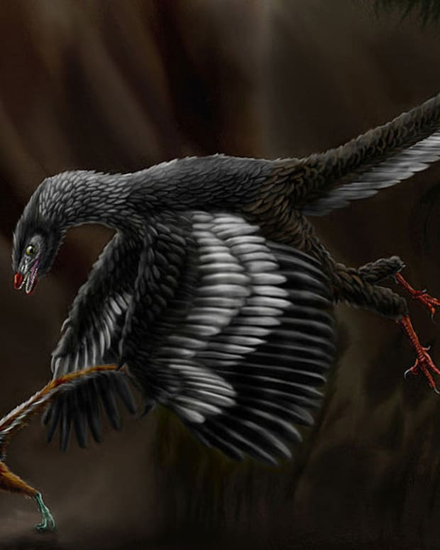 dinosaurs-with-feathers-or-scales