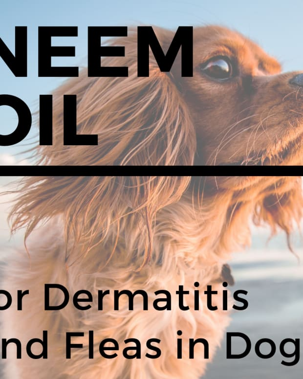 neem-oil-for-dogs-stops-itching-heals-skin-and-repels-fleas-and-mosquitos