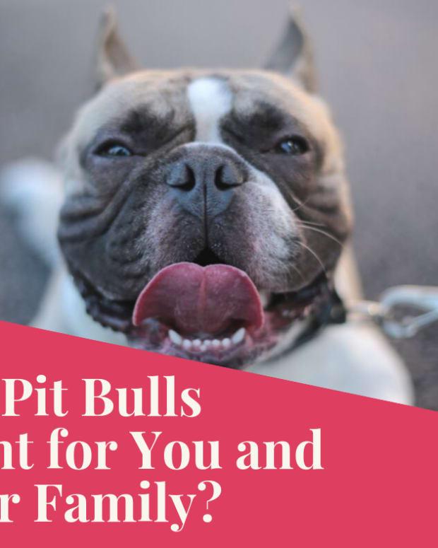 pitbulls-as-family-dogs
