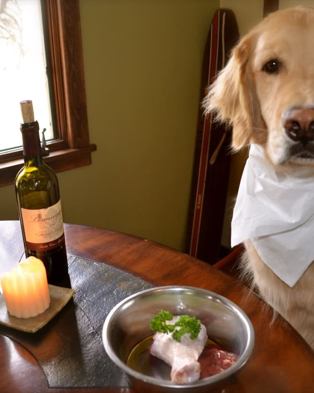 essential-tips-how-to-raise-a-dog-with-a-sensitive-stomach