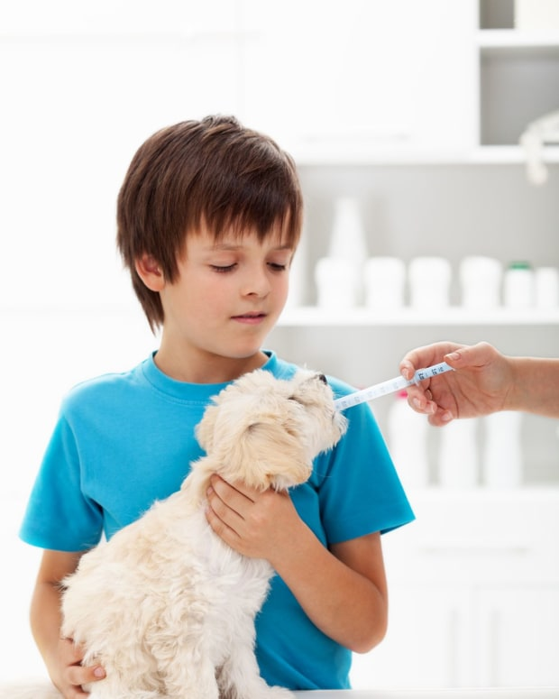 is-conventional-veterinary-care-compromising-the-health-of-our-pets-what-is-the-solution