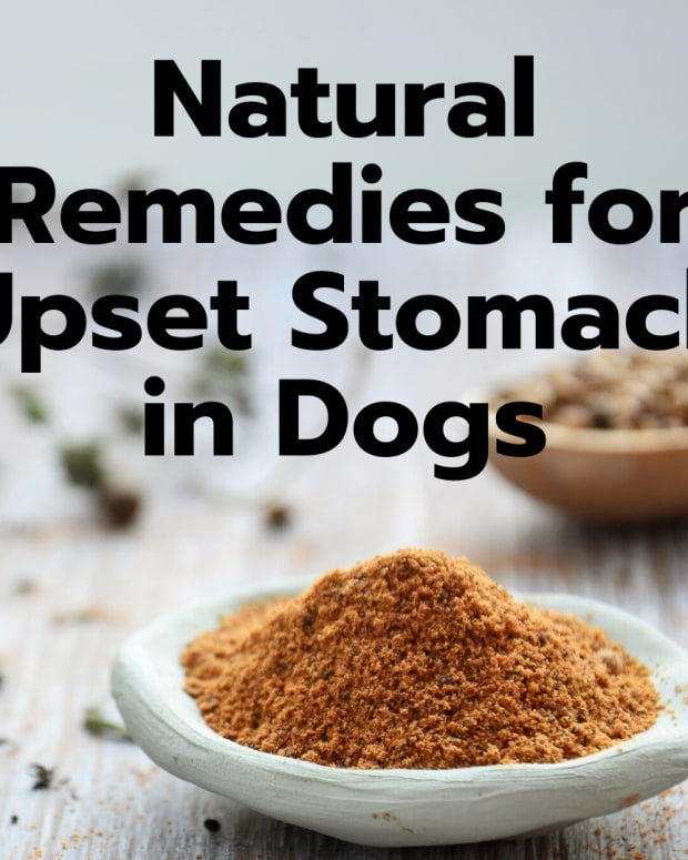 4-easy-home-remedies-to-settle-your-dogs-upset-stomach