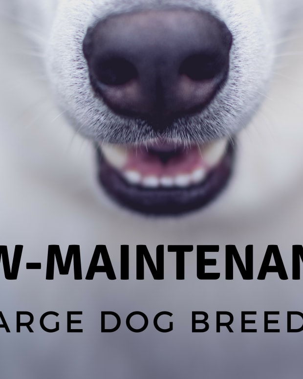 10-of-the-most-low-maintenance-large-dog-breeds