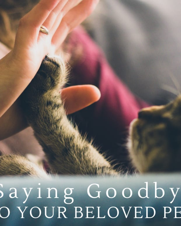 your-beloved-pet-saying-that-last-goodbye