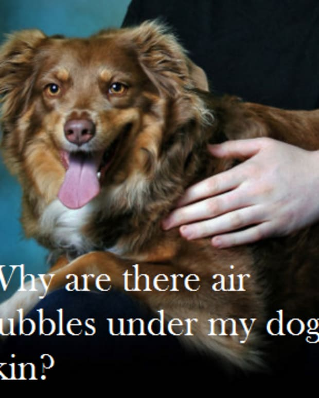 why-does-my-dog-have-air-bubbles-under-the-skin