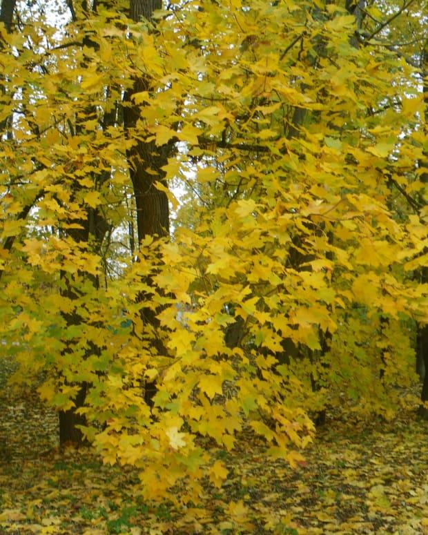 another-autumn