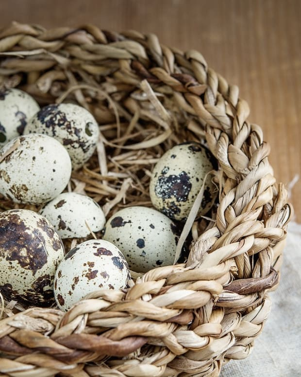 how-do-i-use-one-dozen-quail-eggs