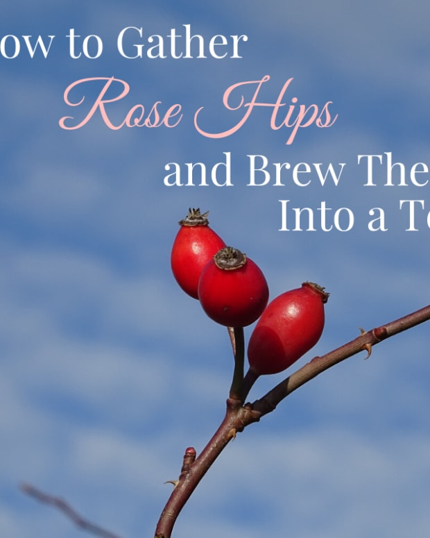rosehip-tea-recipes