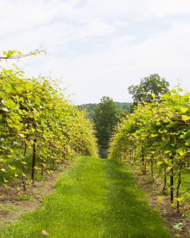best-wineries-near-burlington-vt