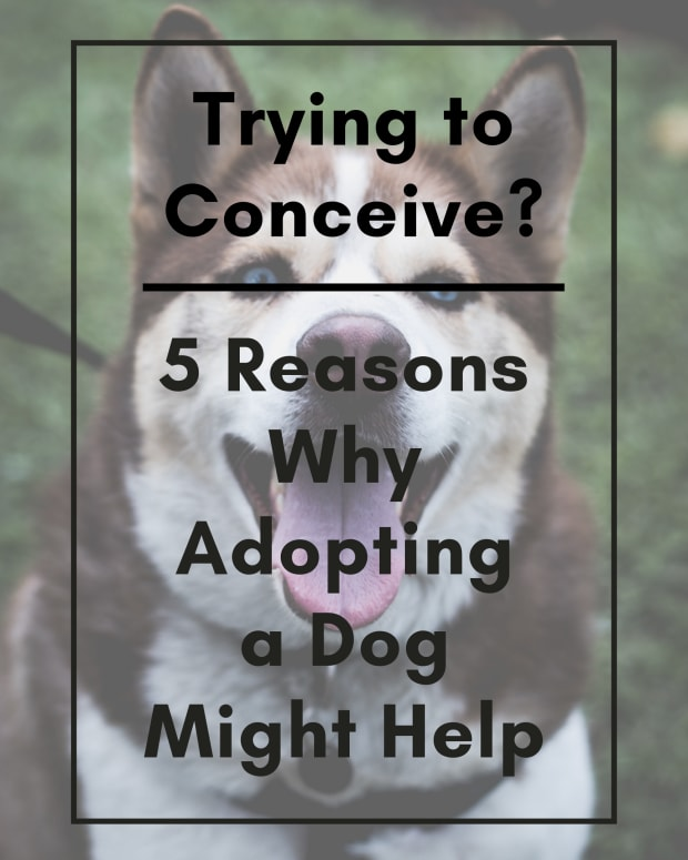 5-reasons-to-adopt-a-dog-for-trying-to-conceive-ttc-couples