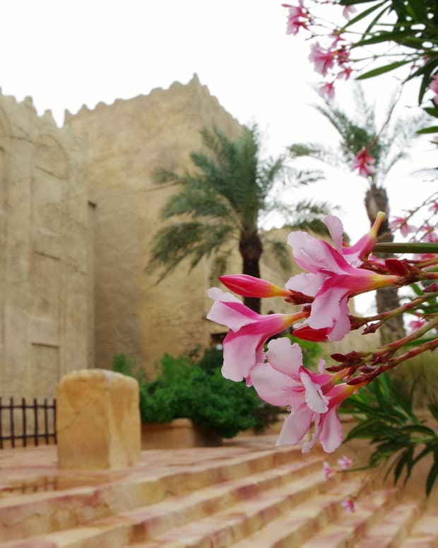beautiful-world-10-attractions-of-bahrain-for-nature-lovers