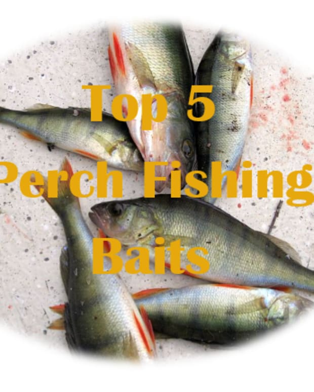 top-5-best-perch-baits