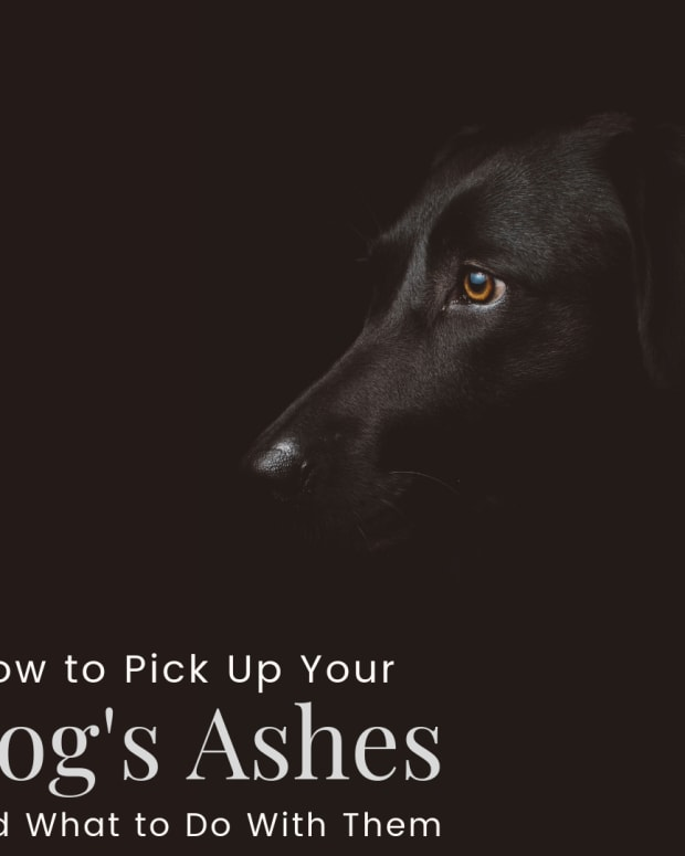 picking-up-your-dogs-ashes-is-a-difficult-time