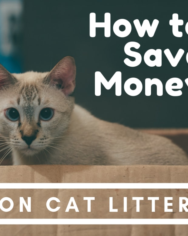 cheapest-litter-options-for-cats