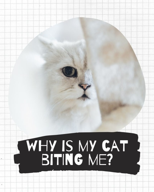 why-does-my-cat-bite-me