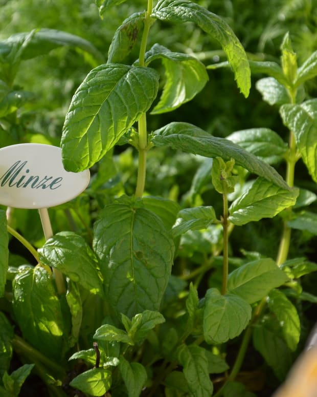 create-your-own-herbal-tea-blends