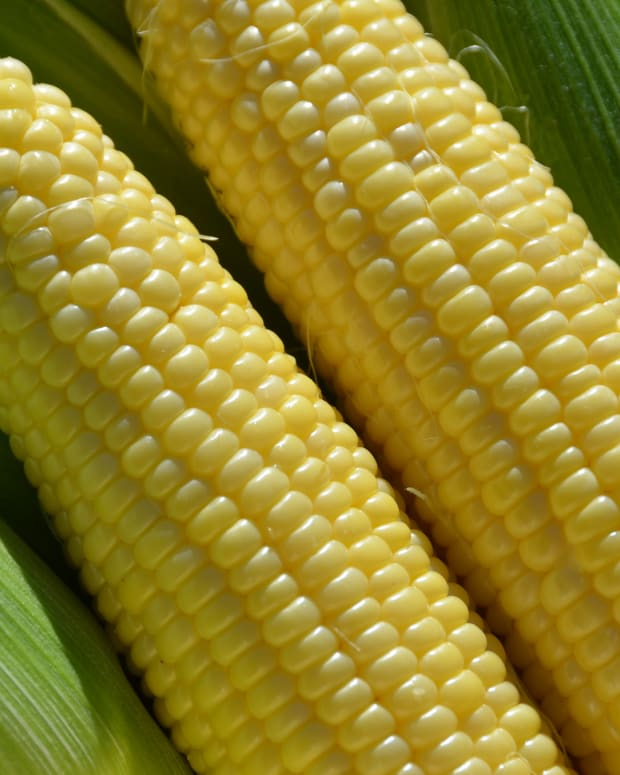 pressure-canning-sweet-corn