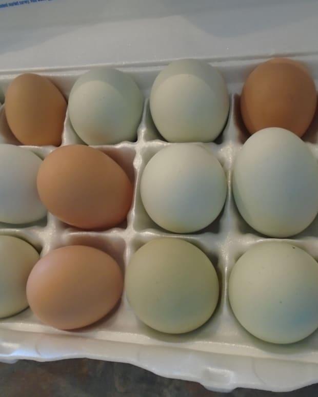 a-fresh-egg-primer