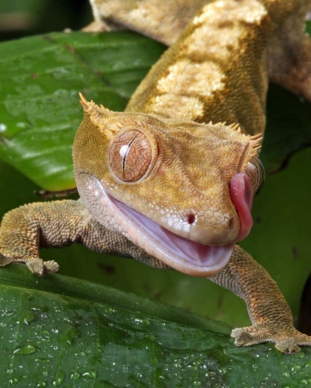 best-pet-reptiles-for-beginners