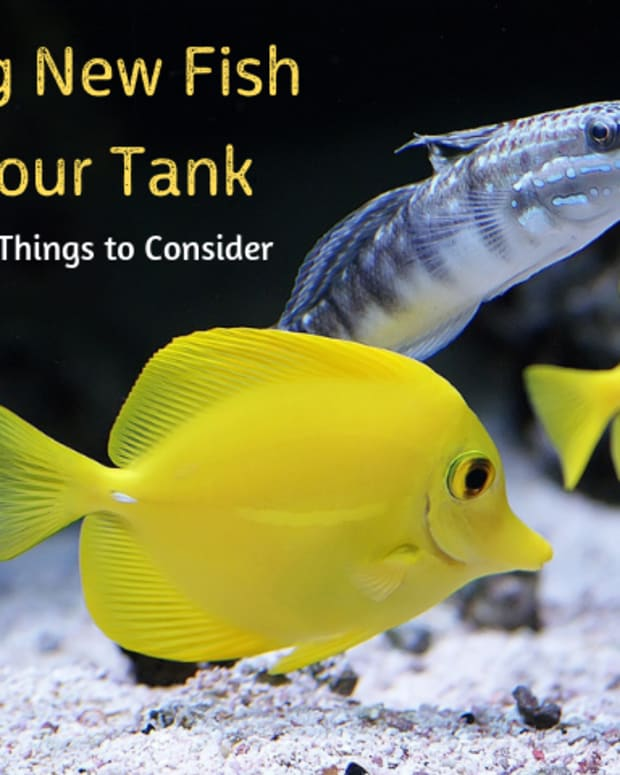 what-to-consider-before-buying-new-aquarium-fish