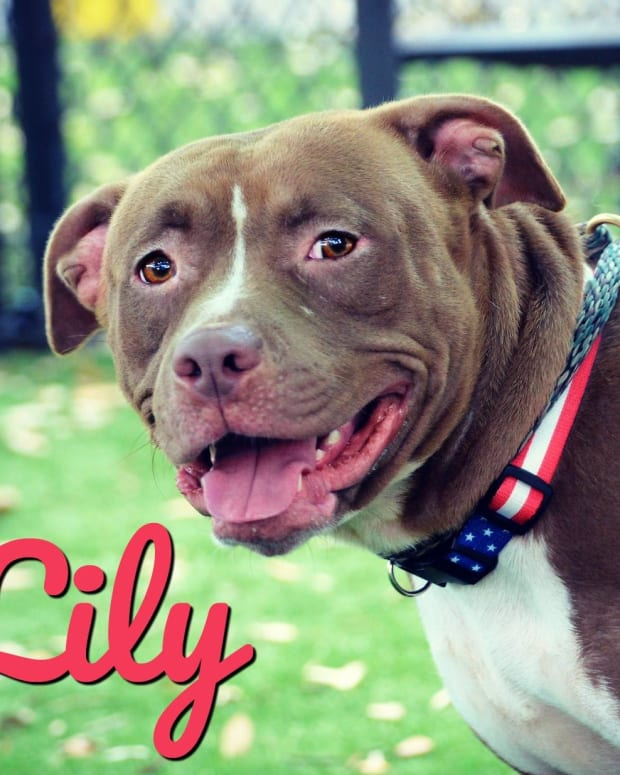 bully-breeds-are-now-targets-for-success-in-community-efforts-to-find-responsible-forever-homes