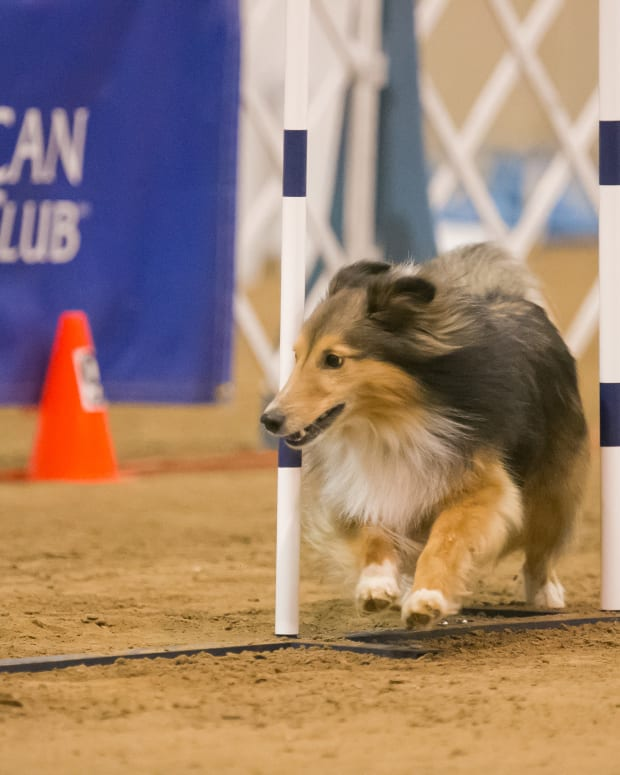 the-real-reason-canine-sports-matter