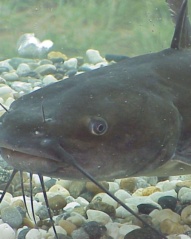 catfishing-america