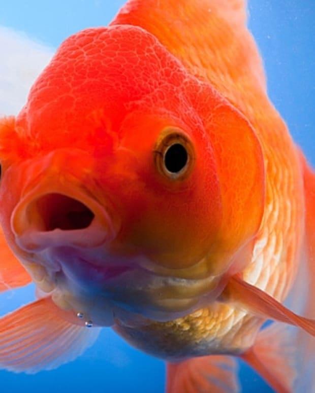 the-healing-power-of-pet-fish