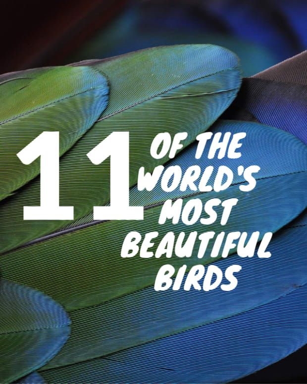 worlds-most-beautiful-birds