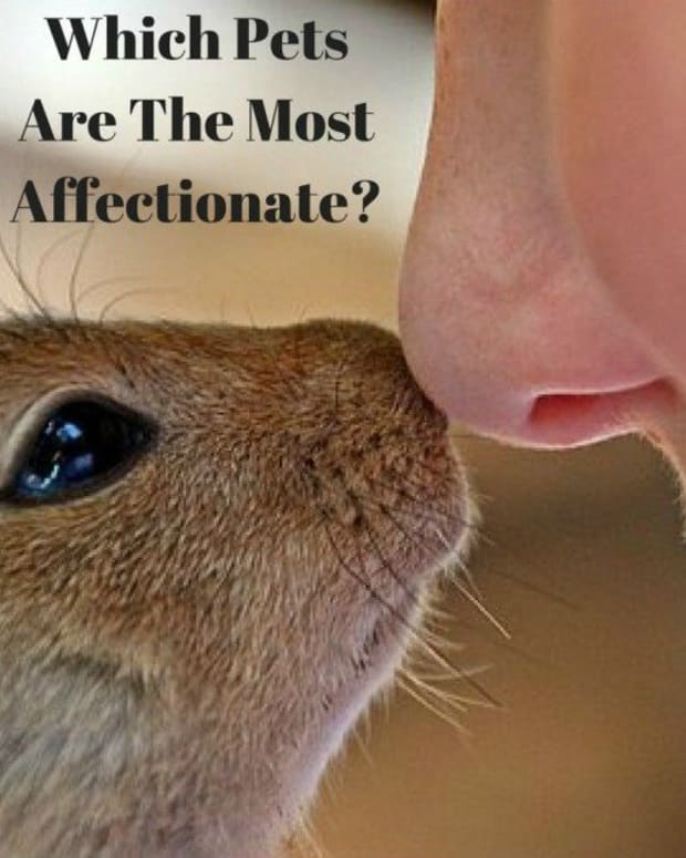 which-pets-are-the-most-affectionate