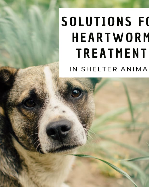shelter-launches-new-and-creative-kennel-area-to-help-with-heartworm-treatment