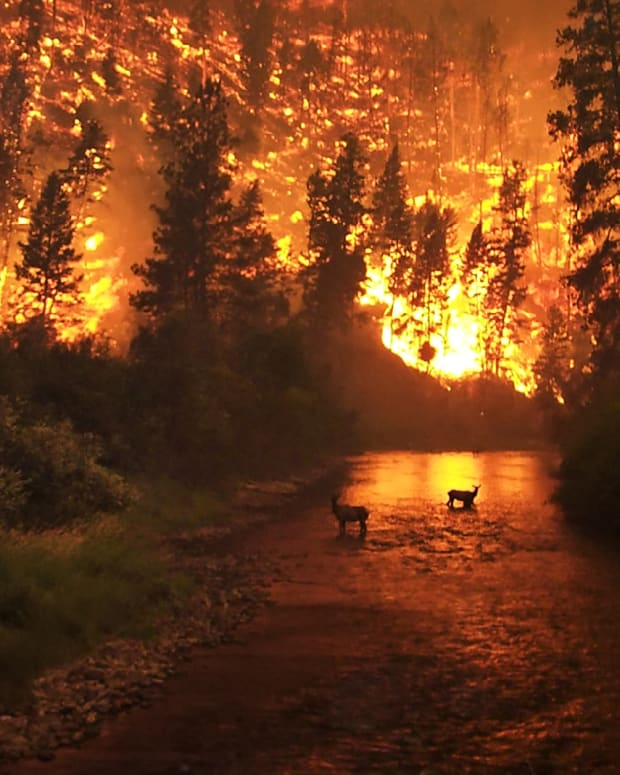 preparing-for-wildfires-and-other-natural-disasters