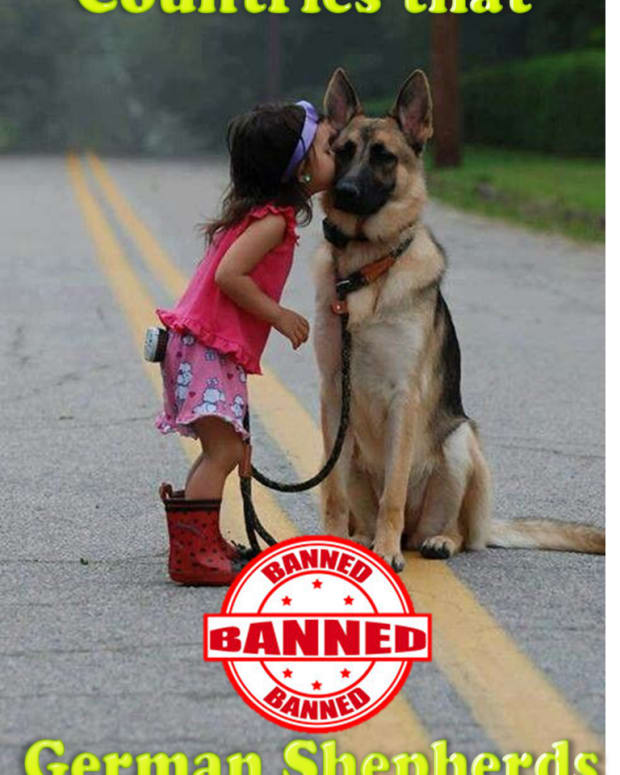 german-shepherds-are-banned-or-restricted-in-10-countries