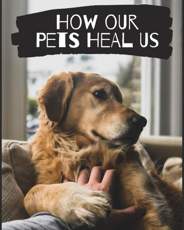 the-healing-power-of-the-dog