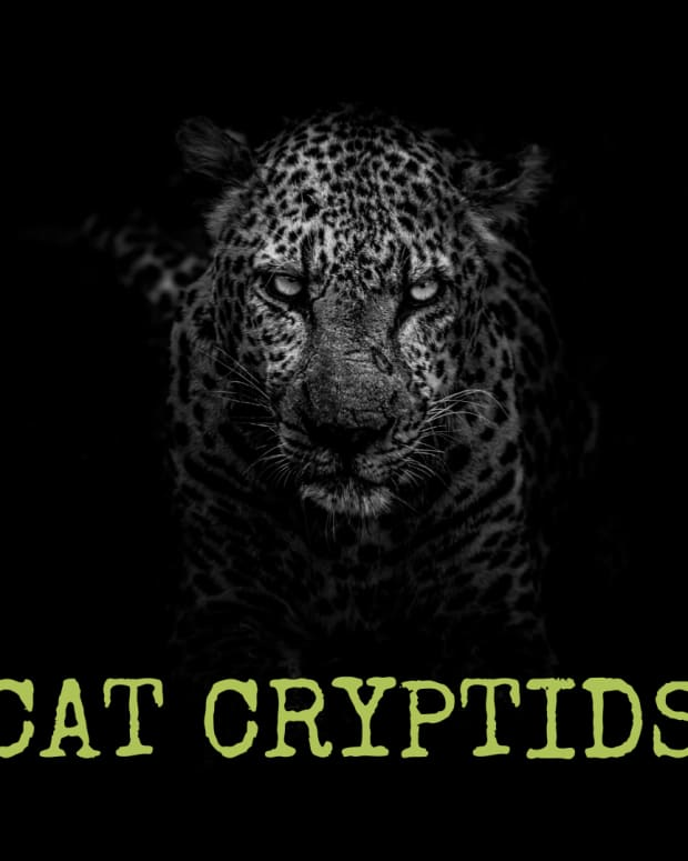 three-cat-cryptids-white-death-wampus-beast-and-cactus-cat