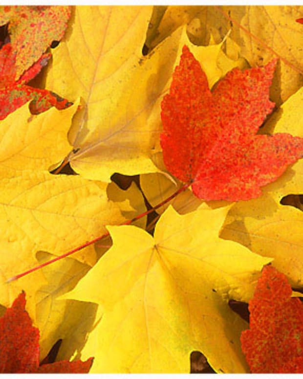 autumnal-leaves