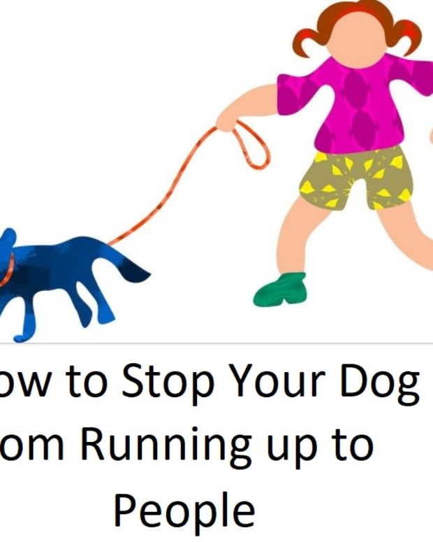 how-can-i-stop-my-dog-from-running-up-to-people