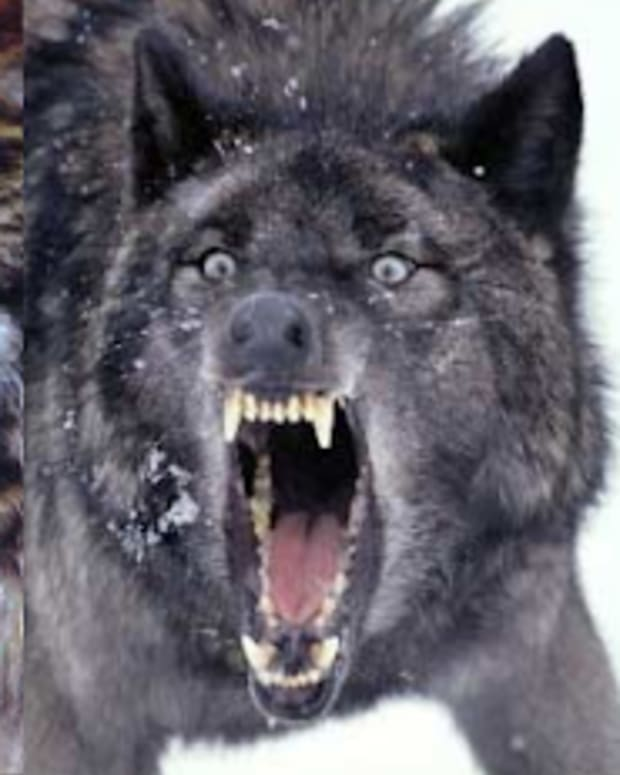 my-wolf-pack