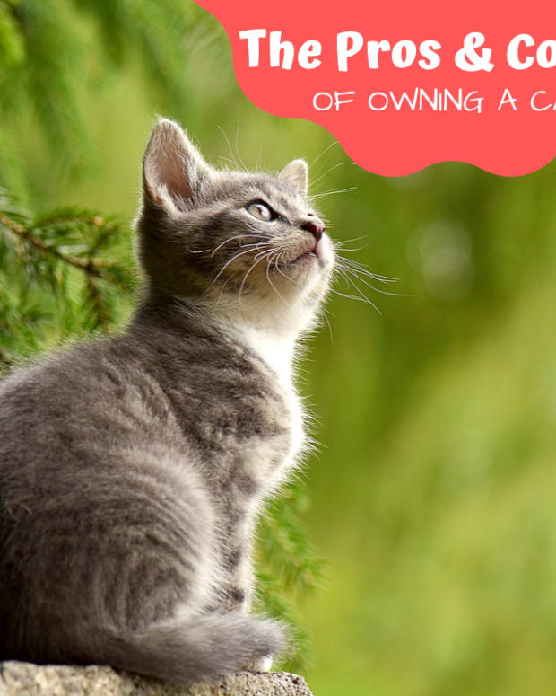 pros-and-cons-of-owning-a-cat