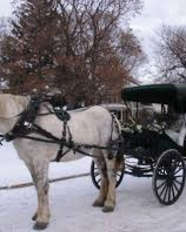 the-carriage-driver-rosemary