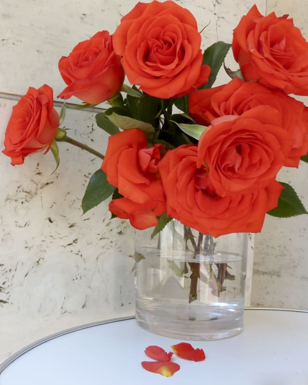 roses-standing-pruodly-in-a-vase-a-lovely-floral-display-poetry