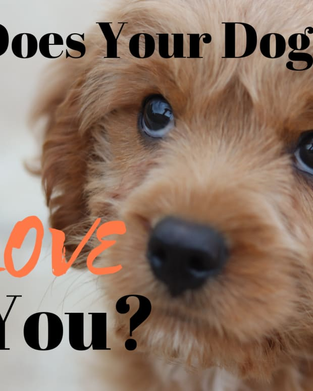 does-your-dog-really-love-you-how-you-can-tell-for-sure