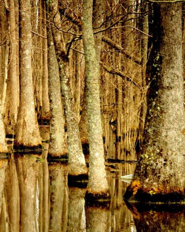 poetry-of-the-swamps