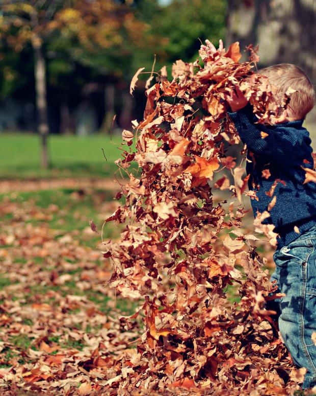 spring-in-autumn