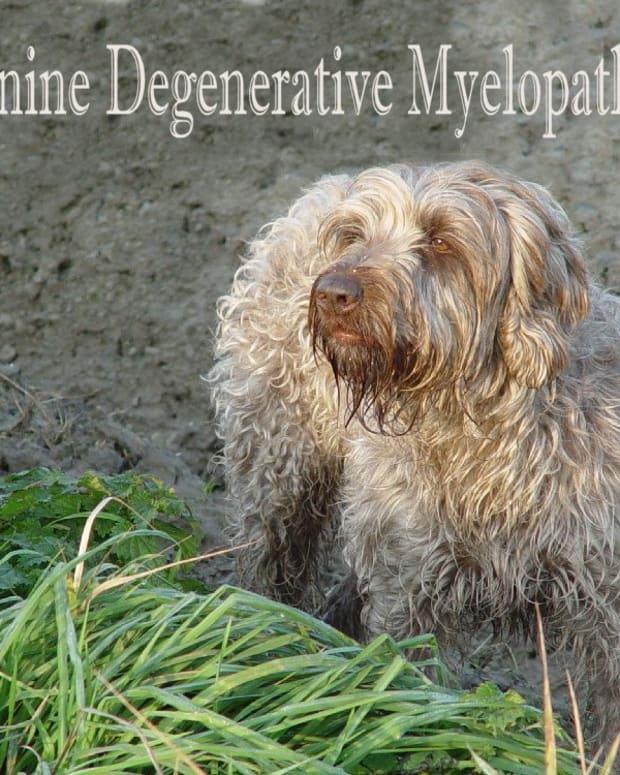 canine-degenerative-myelopathy