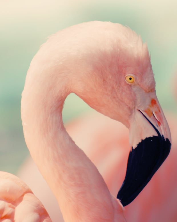 seven-reasons-why-pink-flamingos-are-absolutely-fabulous