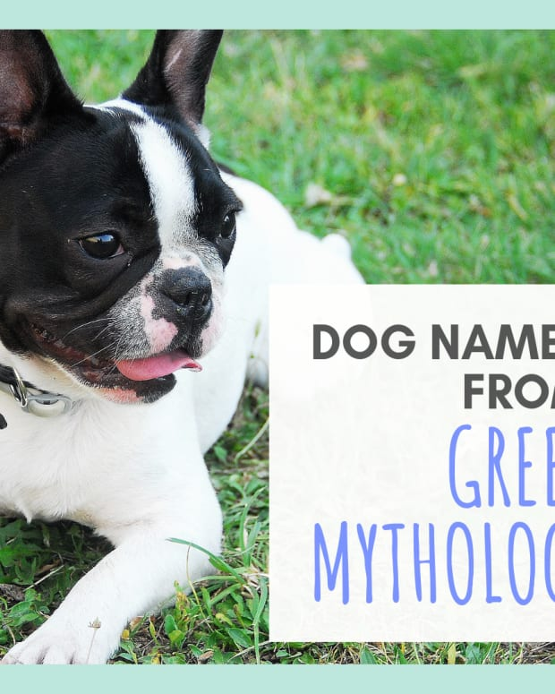 15-names-for-your-dog-based-on-greek-mythology